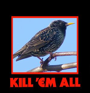 kill_em_starling